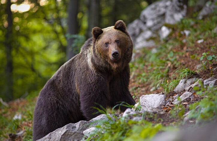 trentino-orso-ruba-pranzo-escursionisti