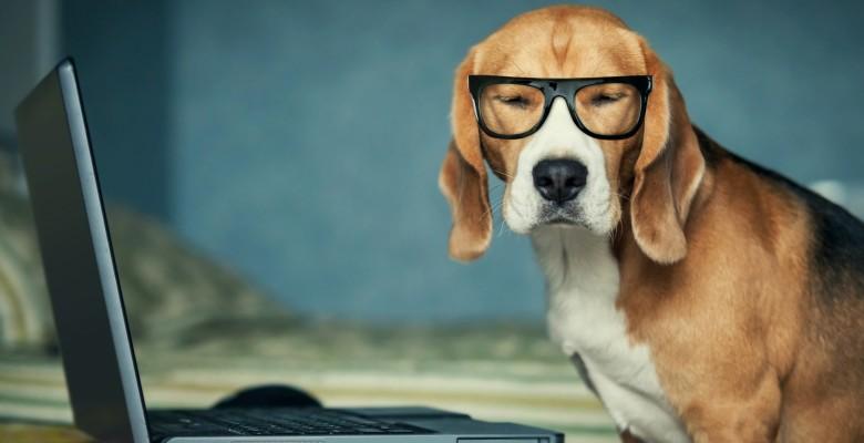 dipendenti crema cani ufficio