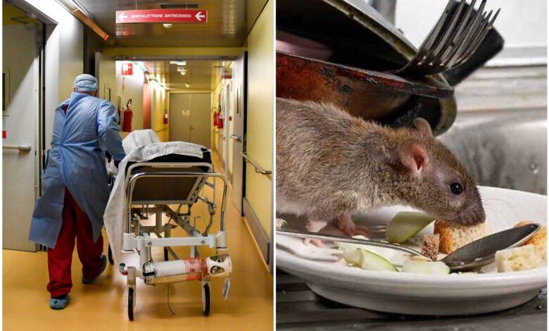 modena-topo-morto-cibo-reparto-oncologico-cosa-successo