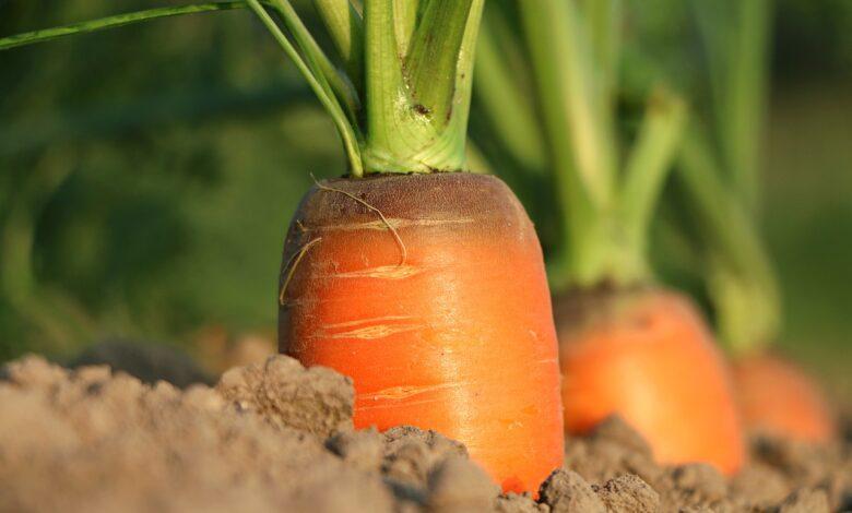 campania-finanziamento-agricoltura-pnrr
